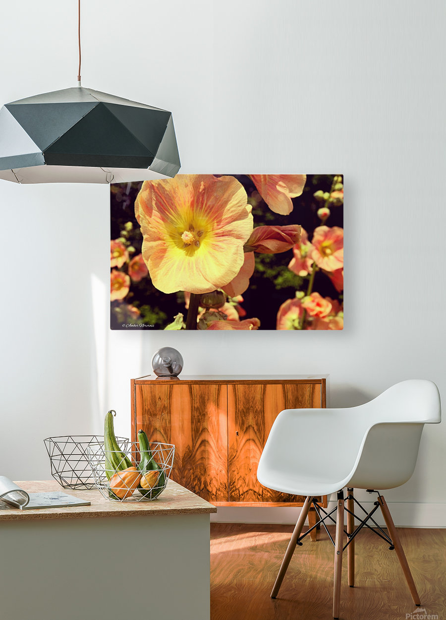 Mid Summer Blossom  HD Metal print with Floating Frame on Back