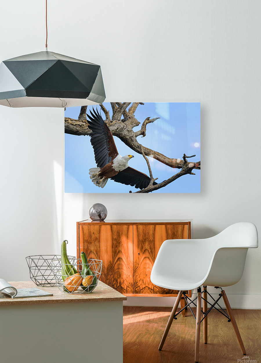 african fish eagle  HD Metal print with Floating Frame on Back