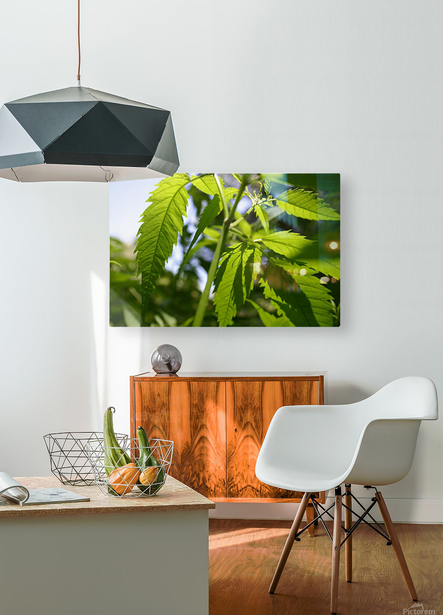 leaf with light  HD Metal print with Floating Frame on Back