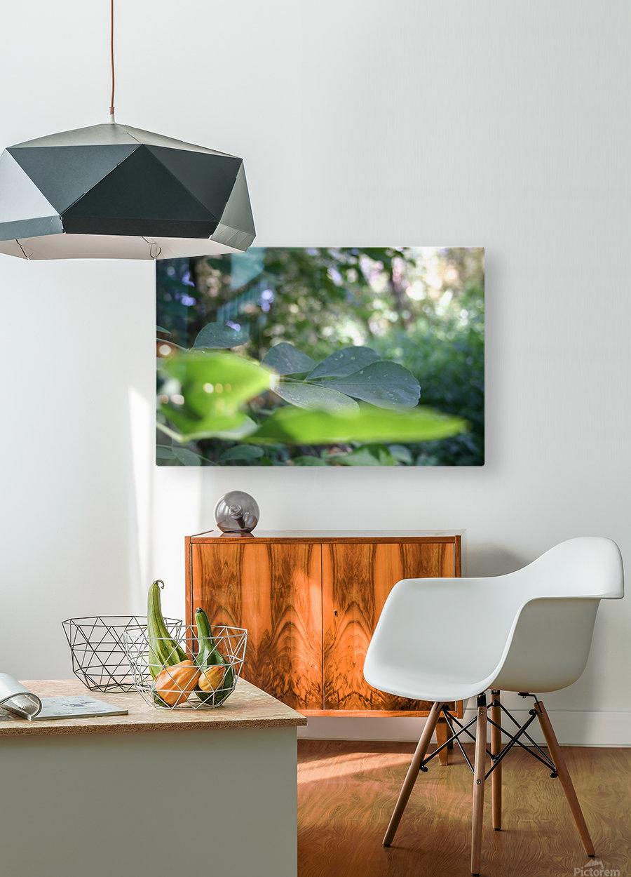 blur leaf  HD Metal print with Floating Frame on Back