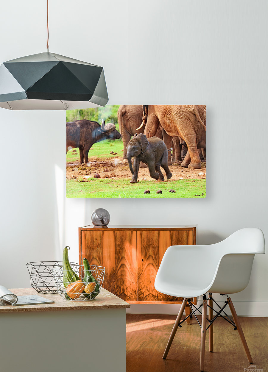 Elephant Baby 582  HD Metal print with Floating Frame on Back