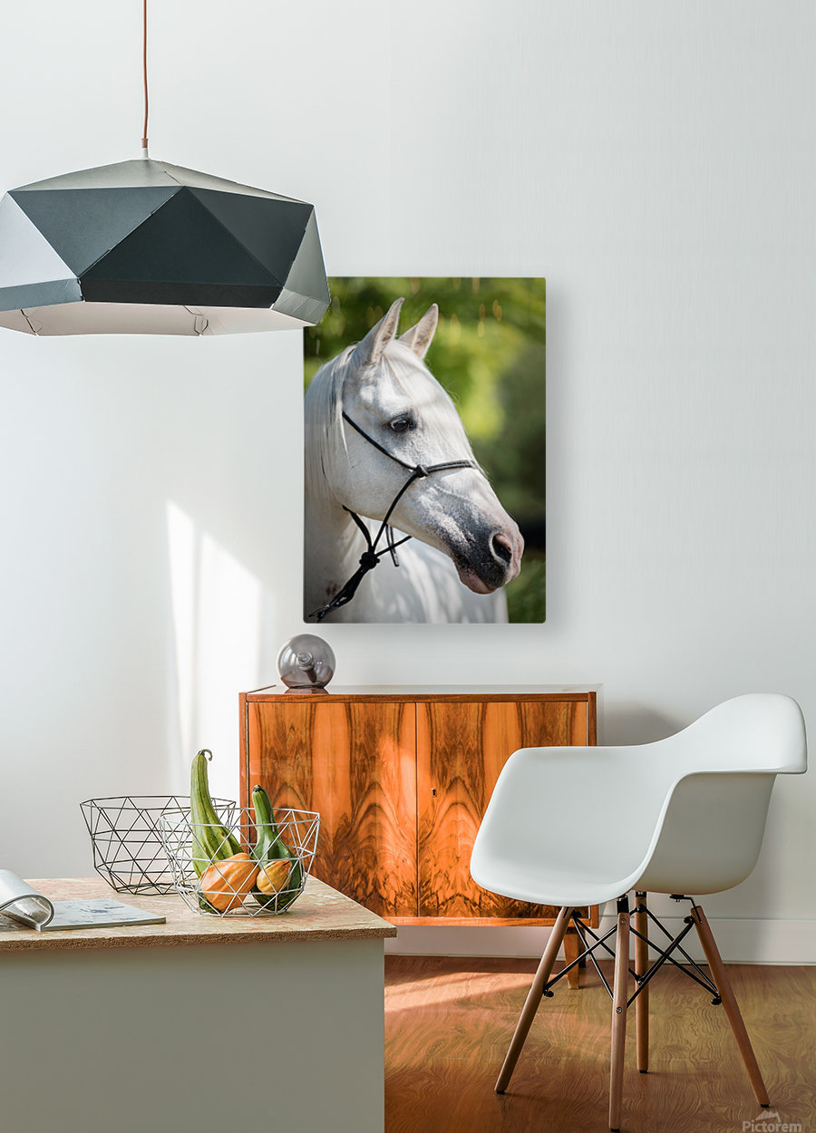 Horse Portrait  HD Metal print with Floating Frame on Back