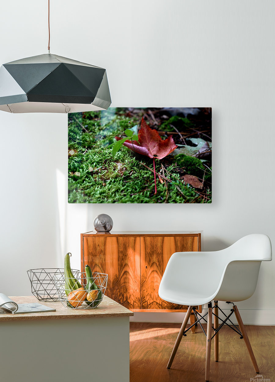 First sign of Fall  HD Metal print with Floating Frame on Back