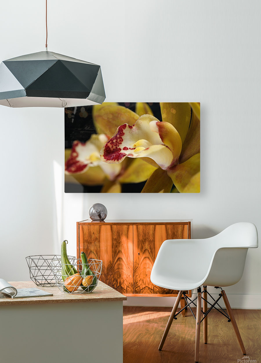 Green and Red Orchid  HD Metal print with Floating Frame on Back