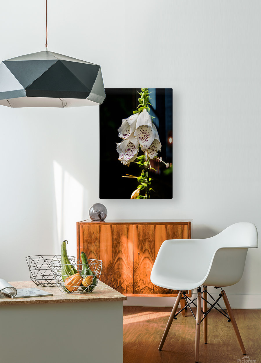 Foxgloves Flowers  HD Metal print with Floating Frame on Back