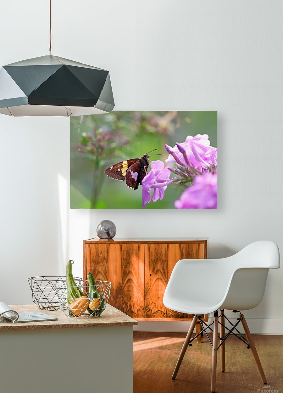 Silver Spotted Skipper  HD Metal print with Floating Frame on Back