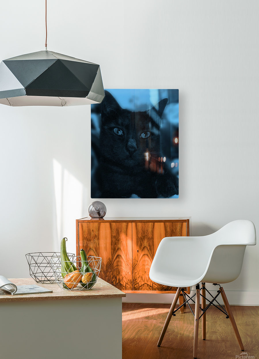 black cat in blue  HD Metal print with Floating Frame on Back