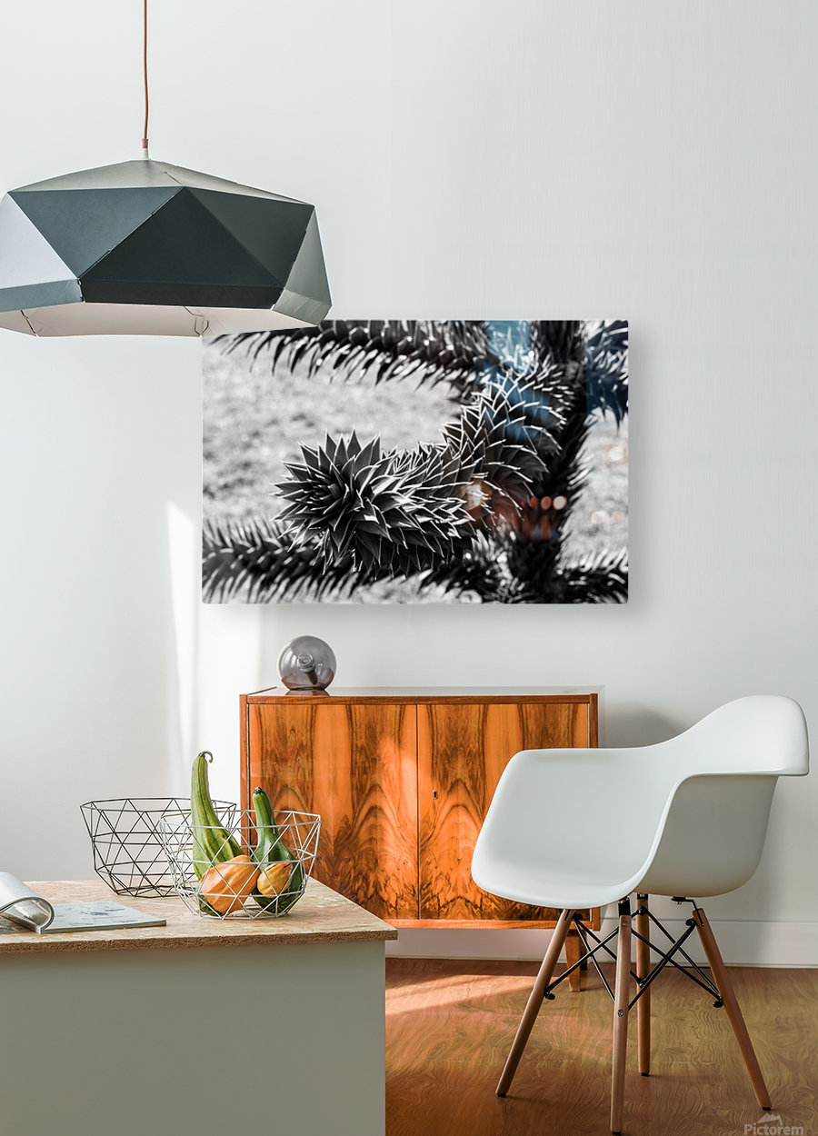 Plant Image BW  HD Metal print with Floating Frame on Back