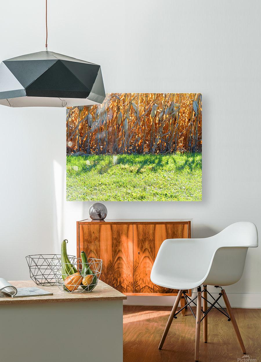 Cornstalk Shadows  HD Metal print with Floating Frame on Back