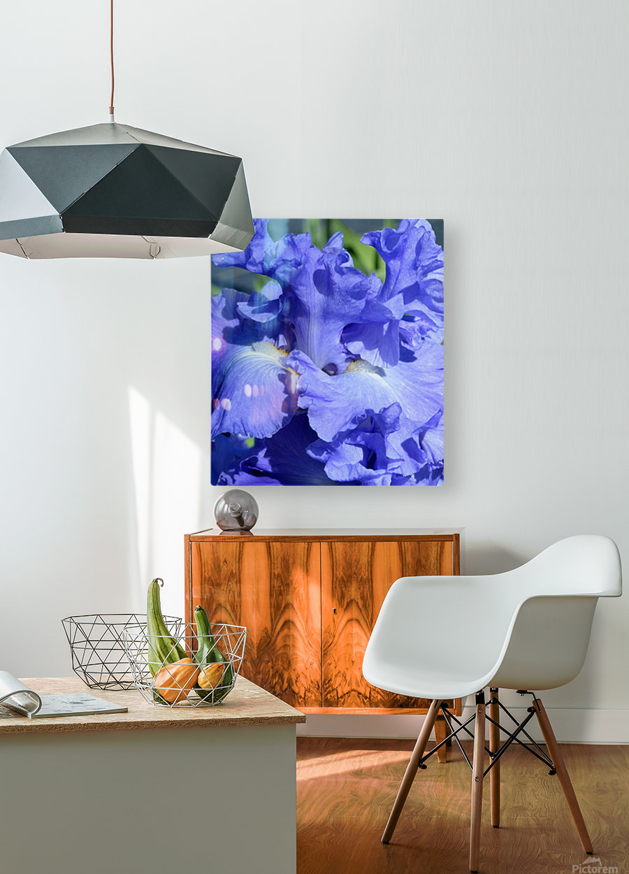 Metoleus Blue Bearded Iris  HD Metal print with Floating Frame on Back