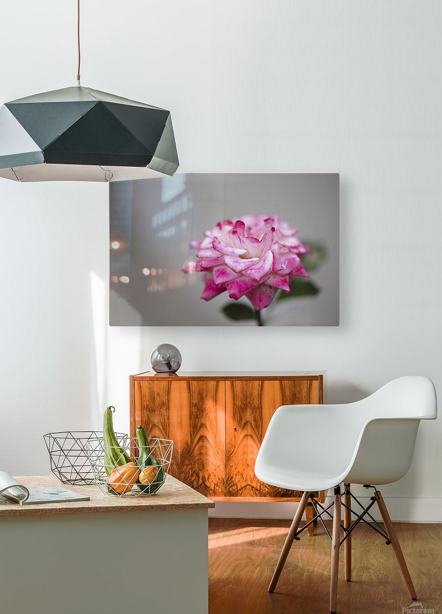 Desert rose  HD Metal print with Floating Frame on Back