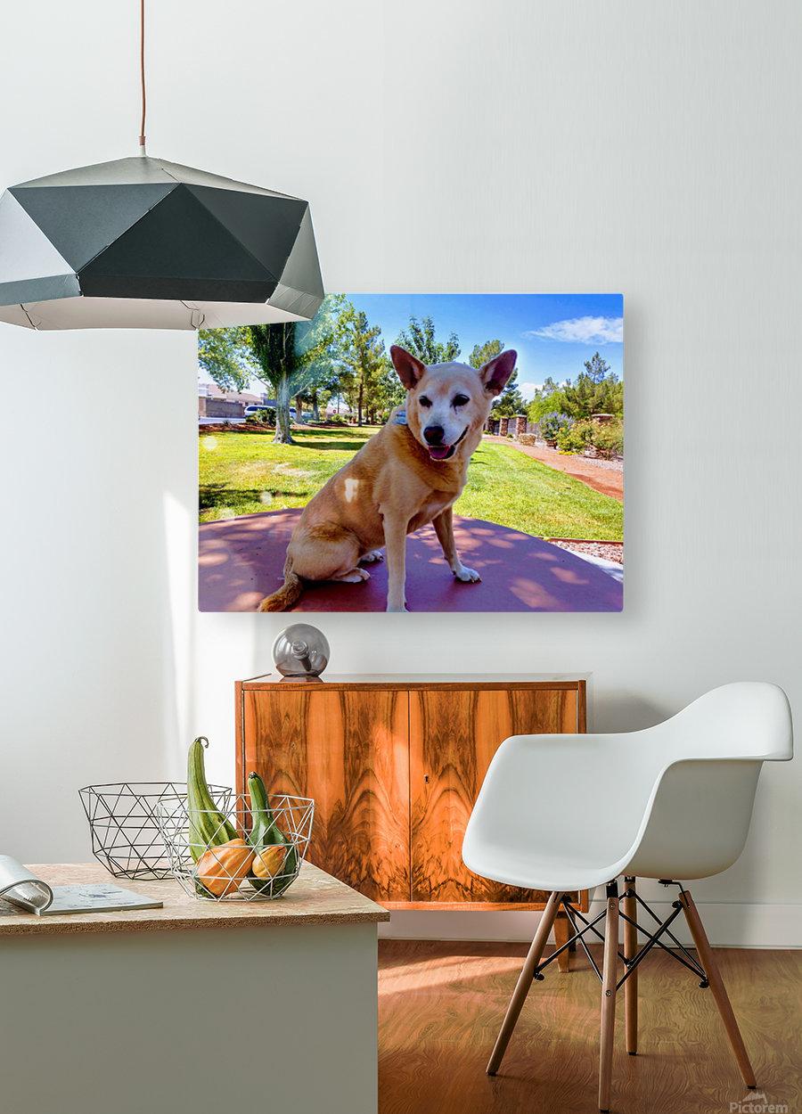 Carolina Dingo  HD Metal print with Floating Frame on Back