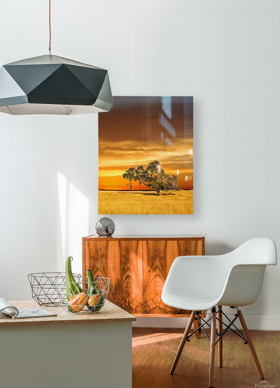 FireGold  HD Metal print with Floating Frame on Back