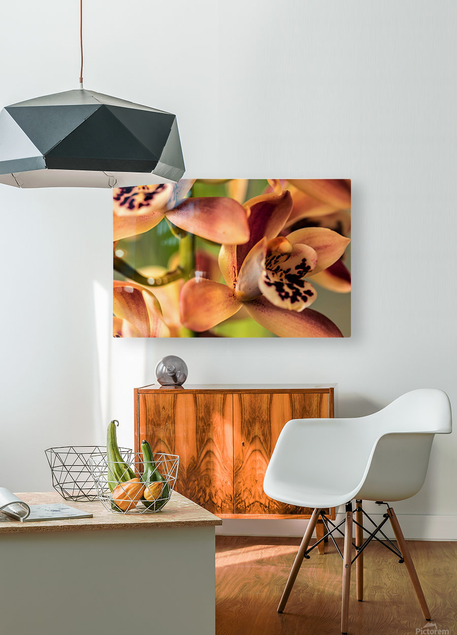 Blush Orchids  HD Metal print with Floating Frame on Back