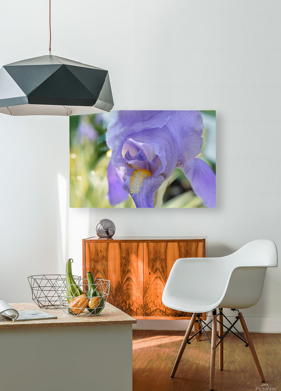Purple Iris Photograph  HD Metal print with Floating Frame on Back