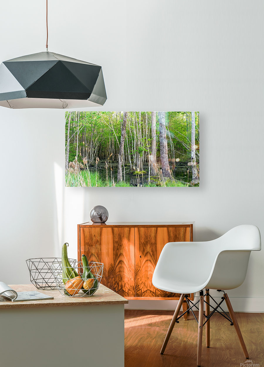 Swamp in Carolina  HD Metal print with Floating Frame on Back