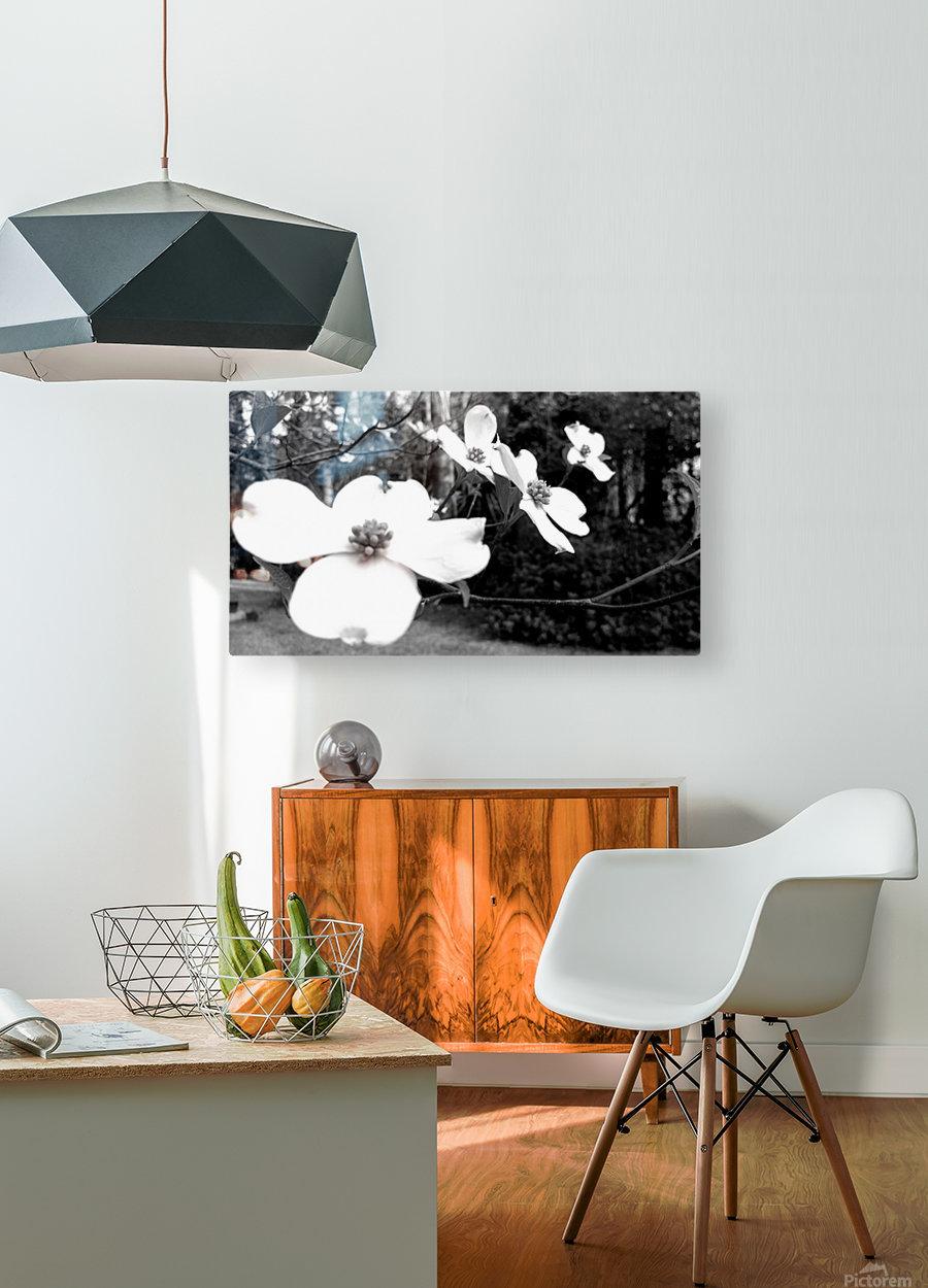 North Carolina Dogwood Flowers   HD Metal print with Floating Frame on Back