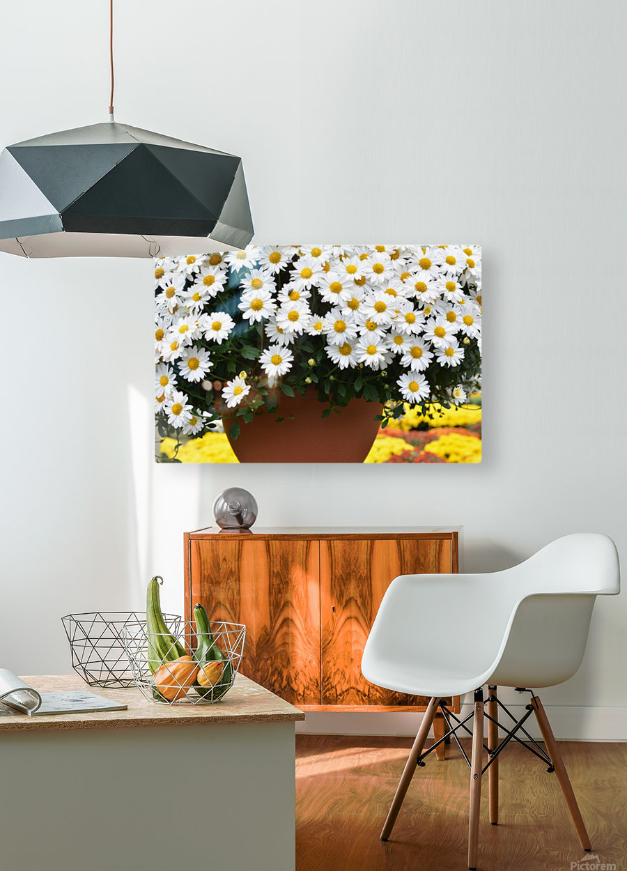 White Flowers In Hanging Pot White Flowers Canvas Print White Flowers Photograph 889  HD Metal print with Floating Frame on Back