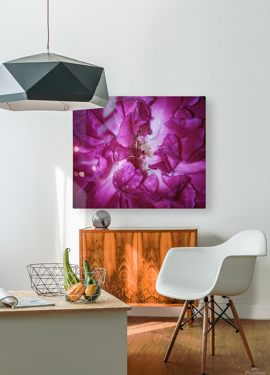 Beautiful Rose    HD Metal print with Floating Frame on Back