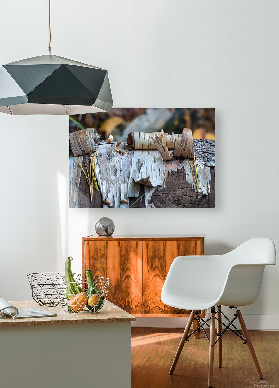 Fallen Birch  HD Metal print with Floating Frame on Back