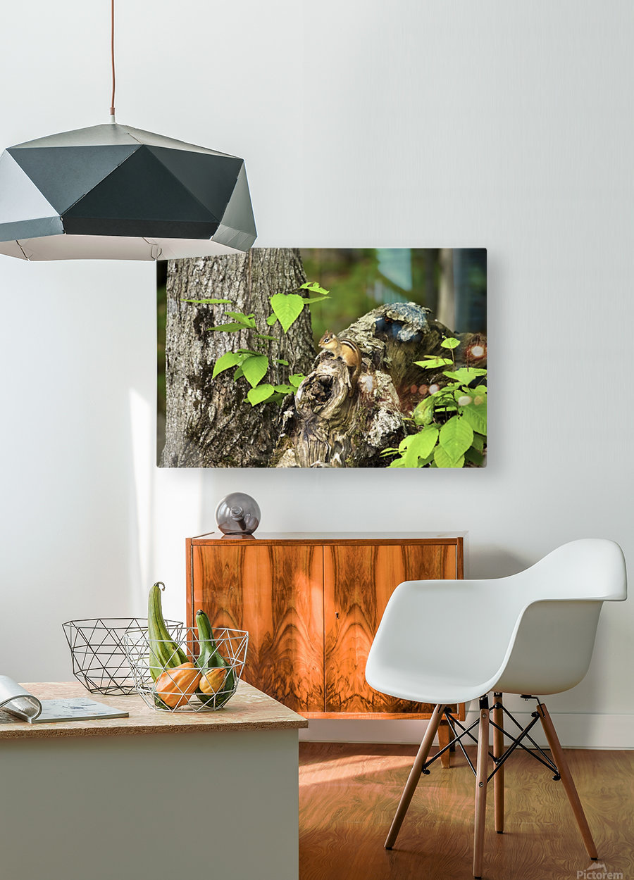 Chipmunk on tree  HD Metal print with Floating Frame on Back