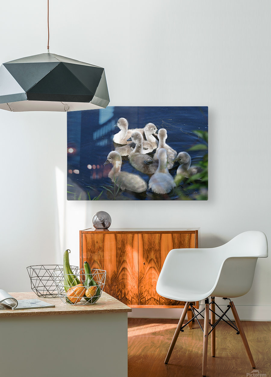 Sygnets  HD Metal print with Floating Frame on Back