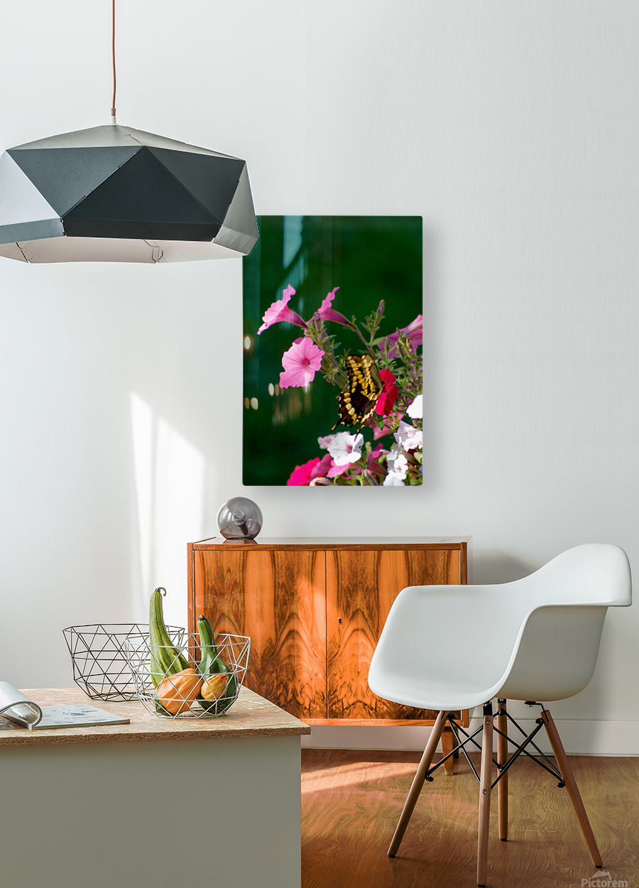 Butterfly on petunias  HD Metal print with Floating Frame on Back