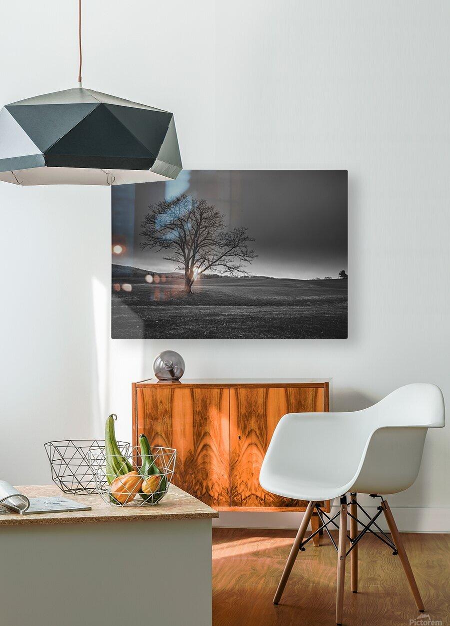 November Tree  HD Metal print with Floating Frame on Back