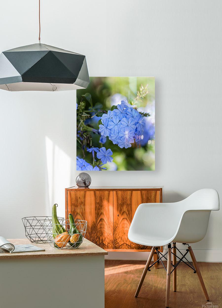 Plumbago  HD Metal print with Floating Frame on Back