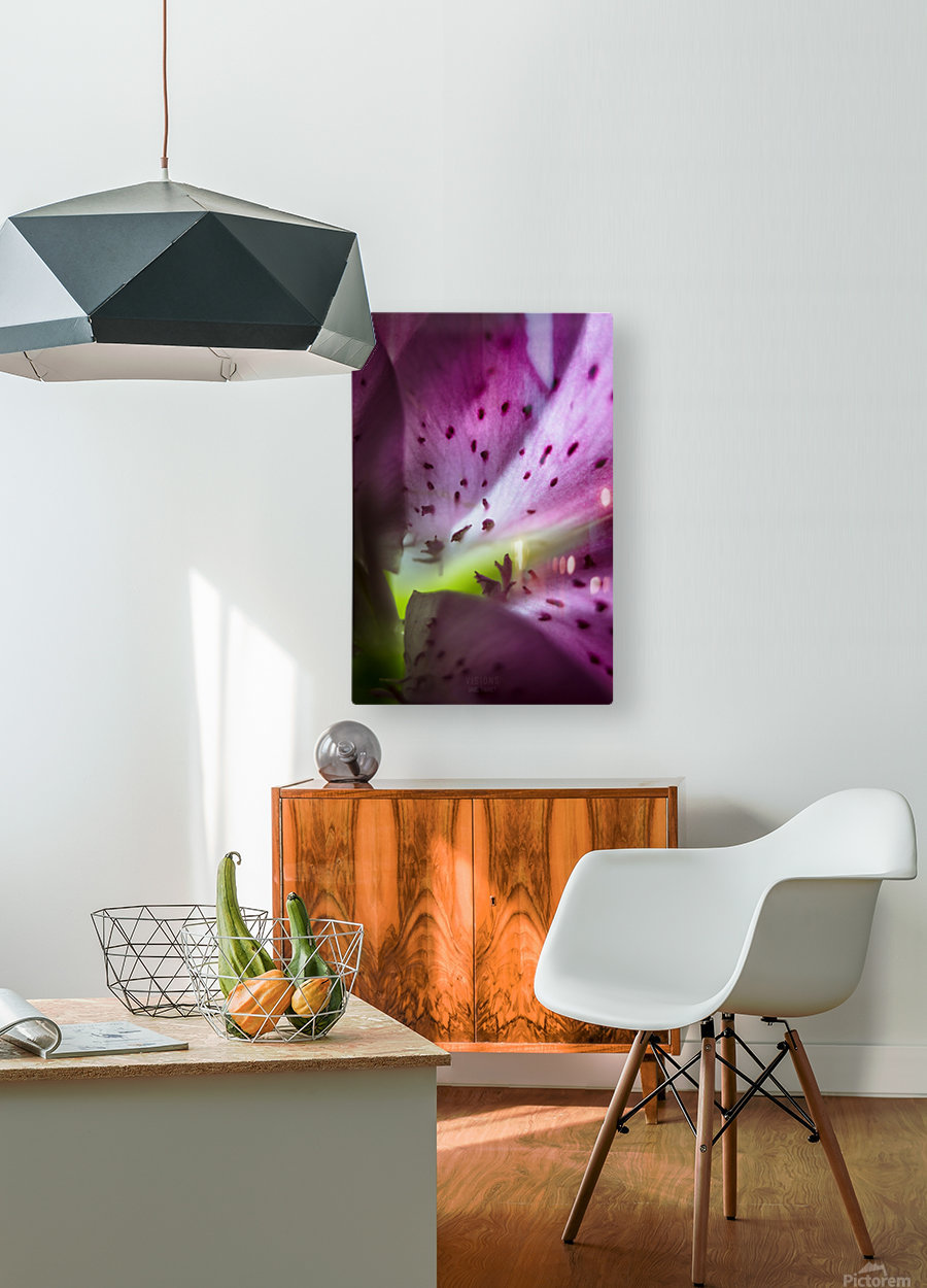 Pinky 2  HD Metal print with Floating Frame on Back