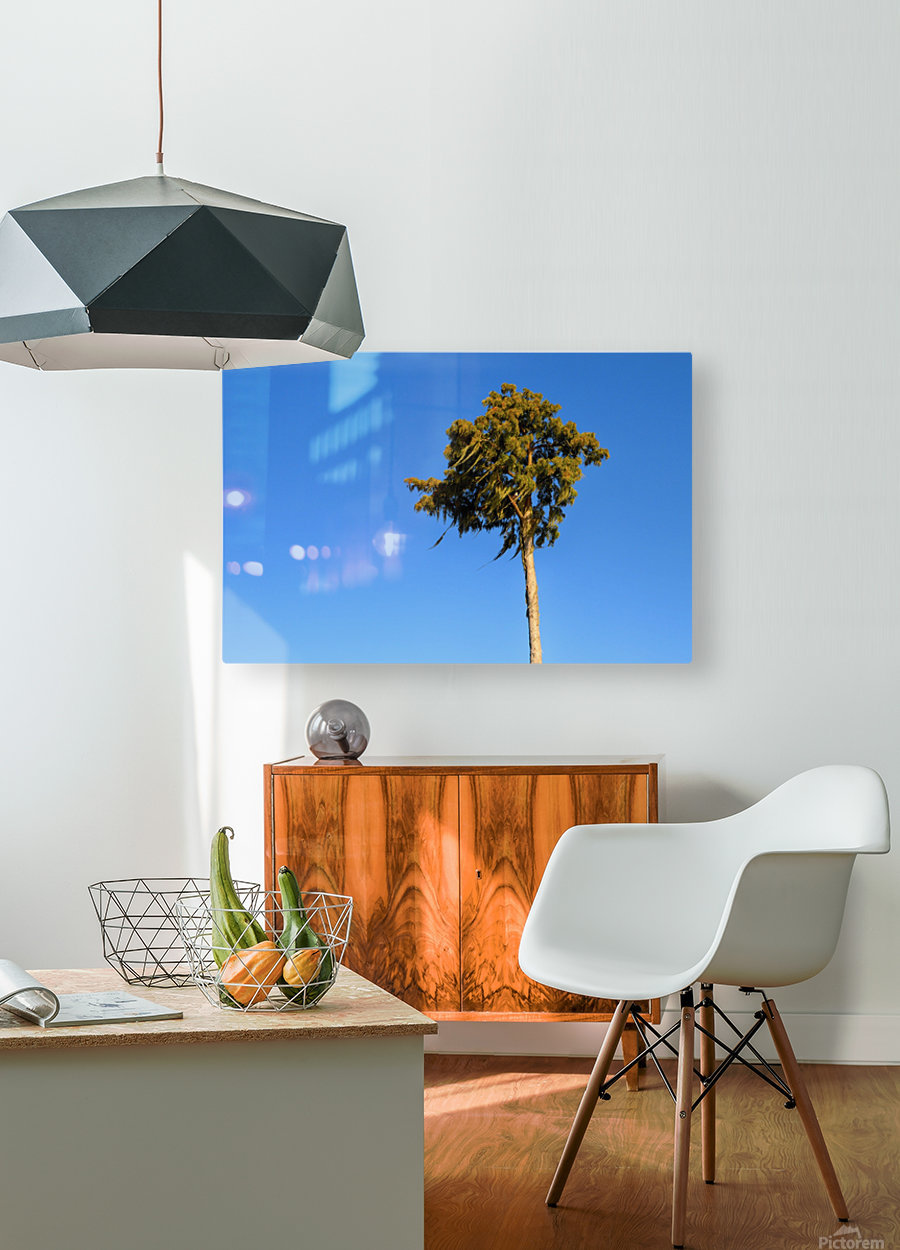 Windy   HD Metal print with Floating Frame on Back