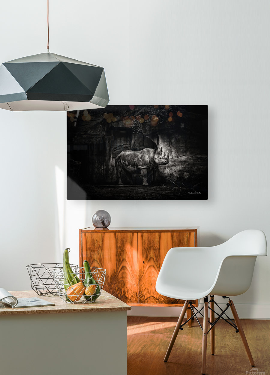 Rhino in Black & White  HD Metal print with Floating Frame on Back