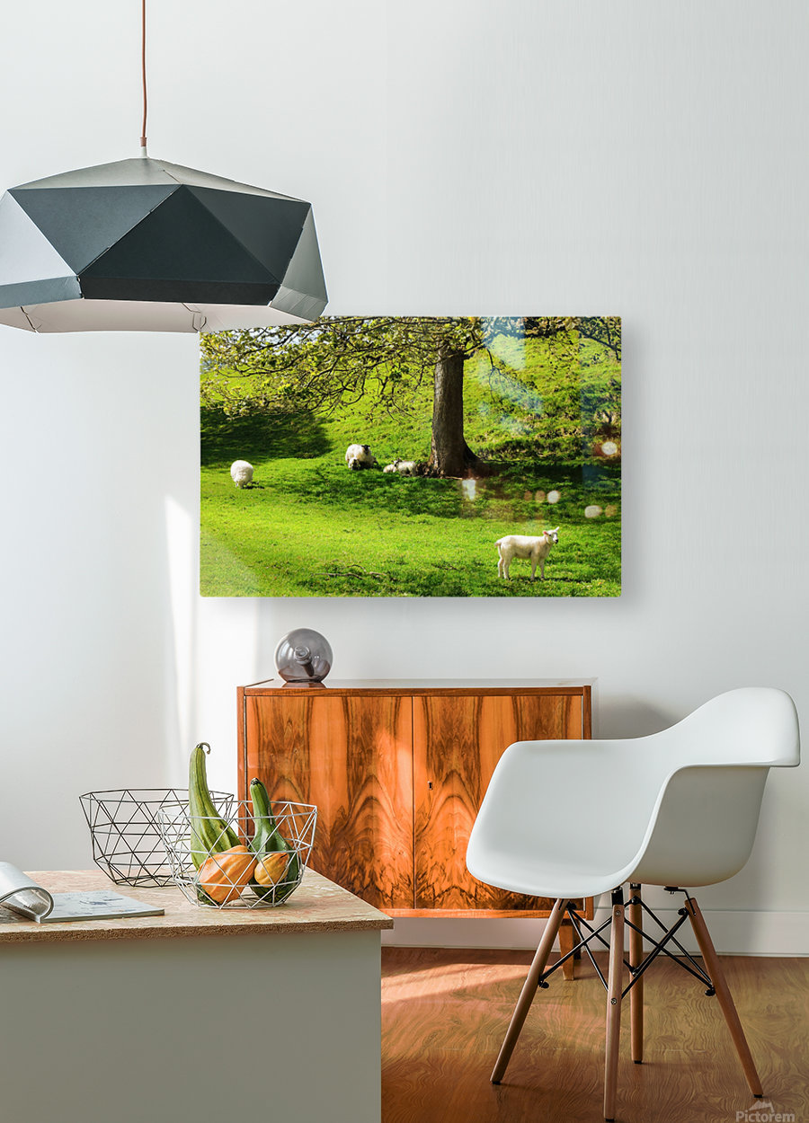 Finding Shade - Northern Ireland  HD Metal print with Floating Frame on Back