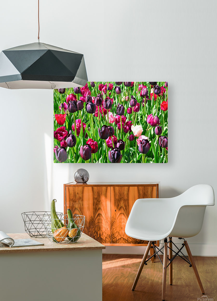 Field of Tulips  HD Metal print with Floating Frame on Back