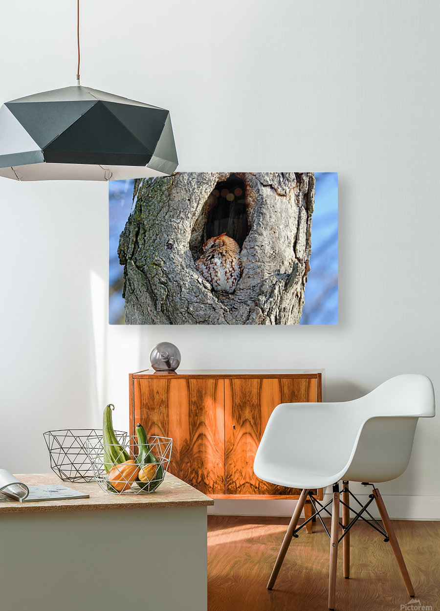 An Eye On You  HD Metal print with Floating Frame on Back