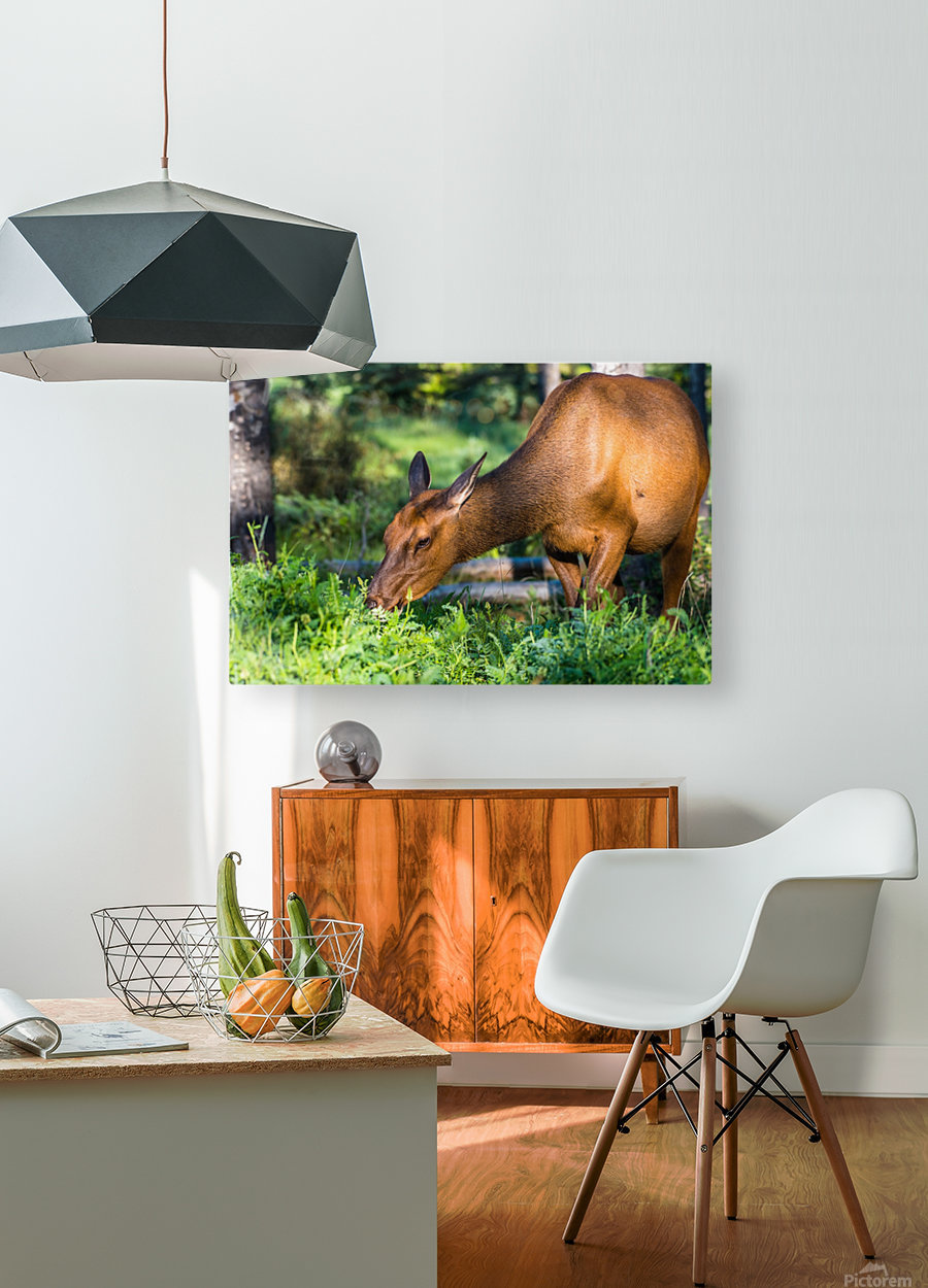 Baby Elk  HD Metal print with Floating Frame on Back