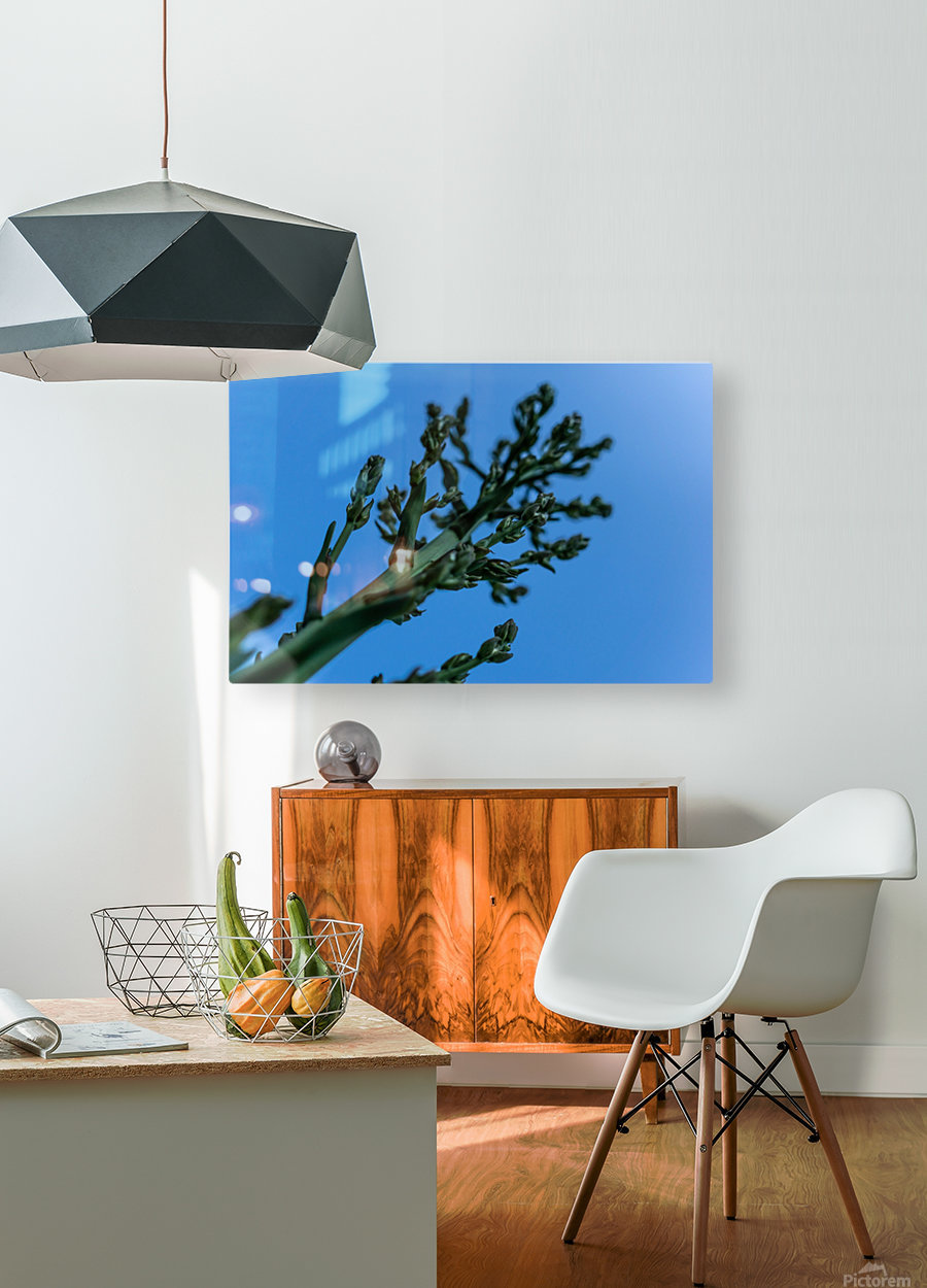 Yucca Skies  HD Metal print with Floating Frame on Back