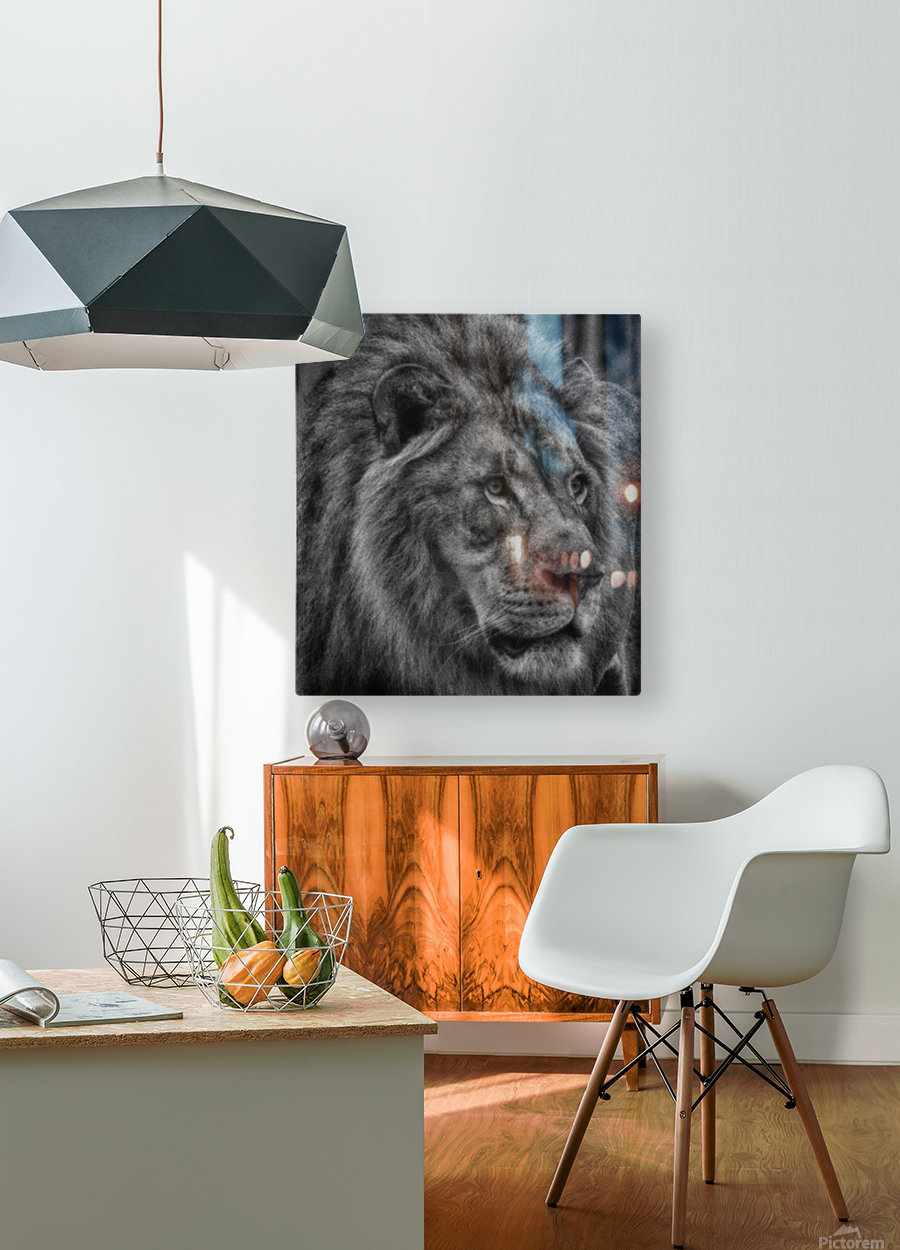 Artistic black and white Lion  HD Metal print with Floating Frame on Back