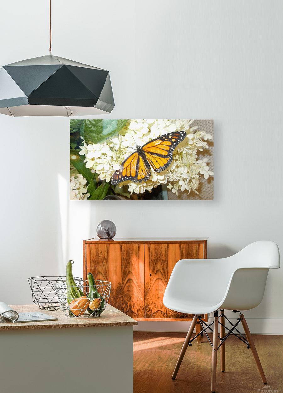 DSCN0904  HD Metal print with Floating Frame on Back