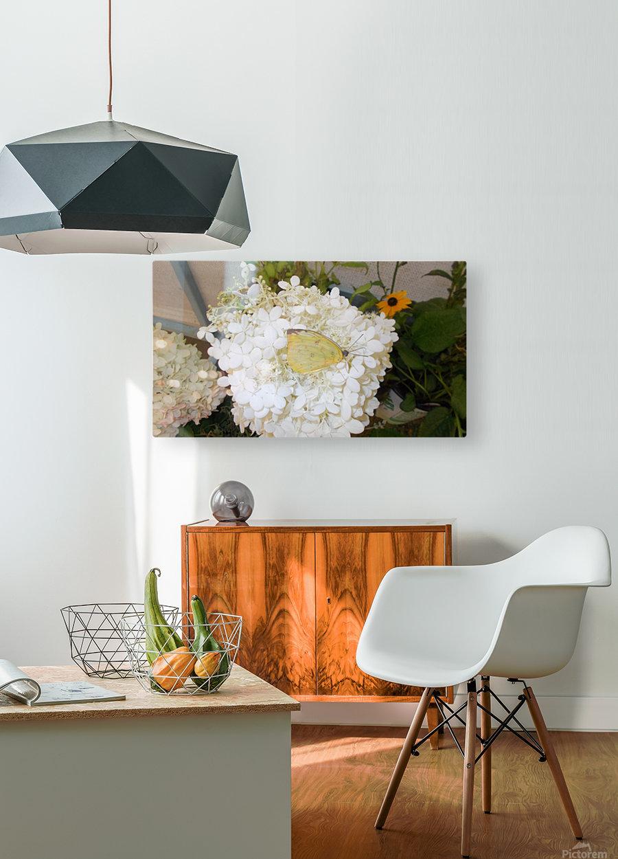 DSCN0889  HD Metal print with Floating Frame on Back