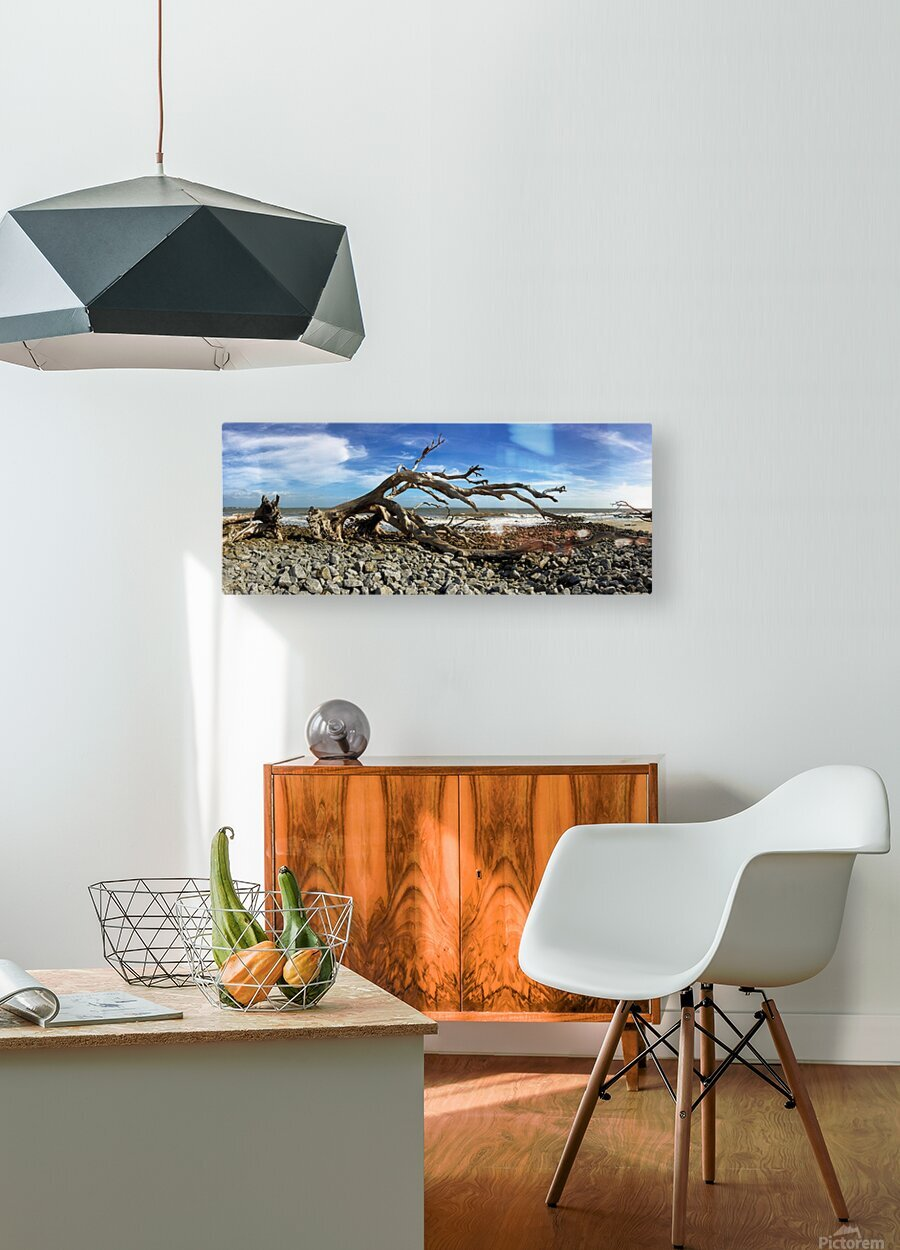 Driftwood Beach Panorama 101  HD Metal print with Floating Frame on Back