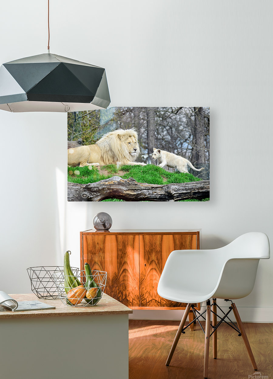 White Lion with Baby  HD Metal print with Floating Frame on Back