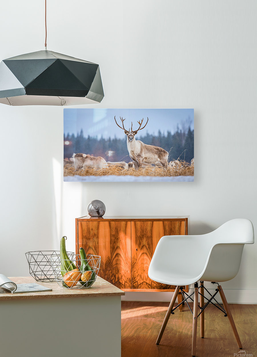 Majestic  HD Metal print with Floating Frame on Back