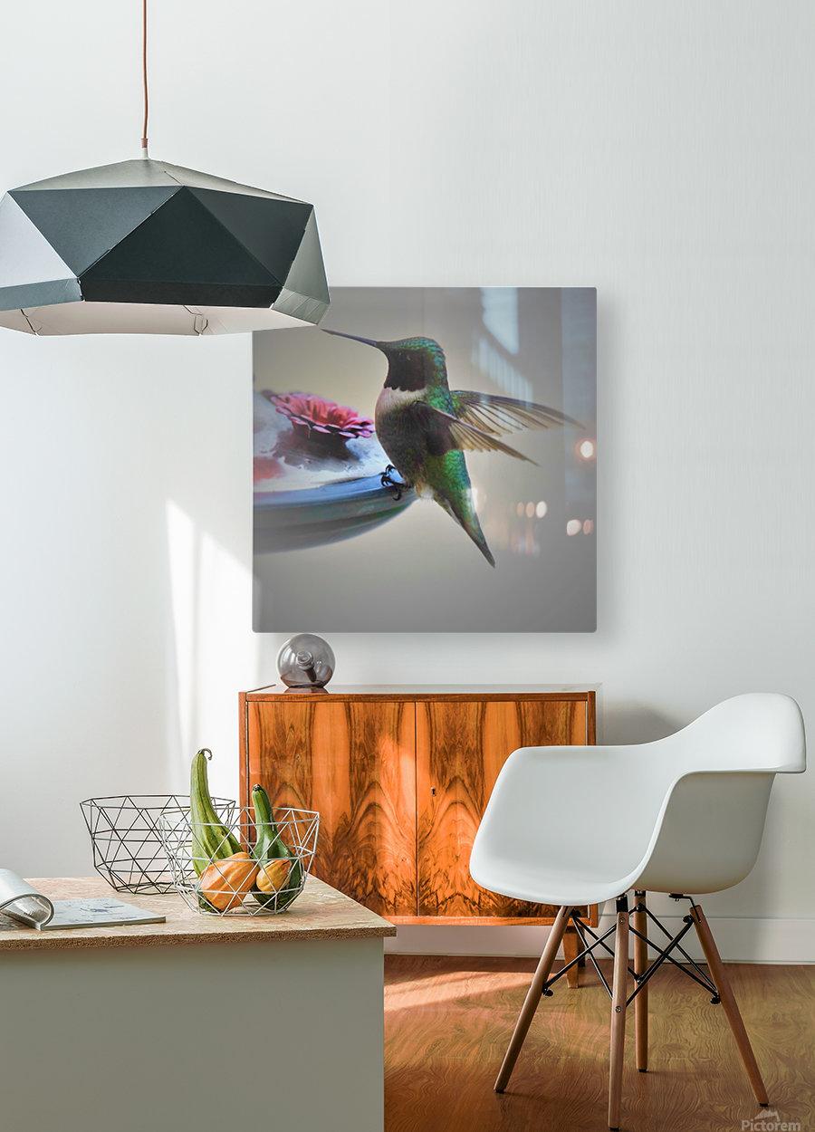 Colibris  Impression métal HD avec cadre flottant sur le dos
