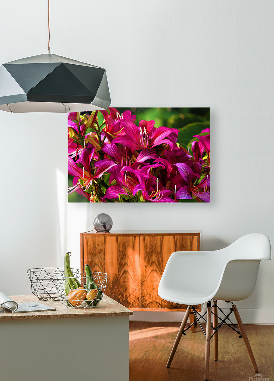 Hong Kong Orchid  HD Metal print with Floating Frame on Back