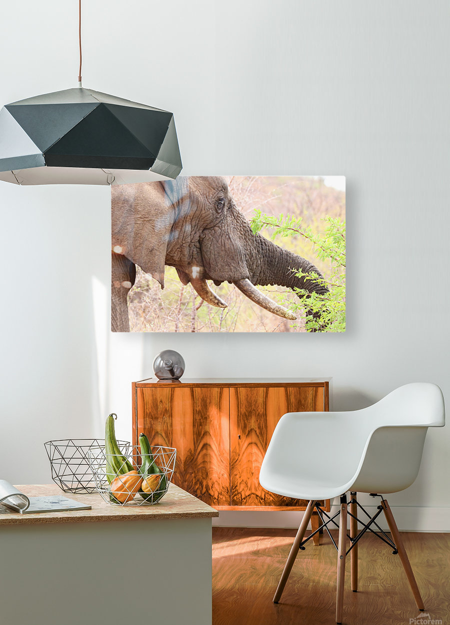 Elefant 6770  HD Metal print with Floating Frame on Back