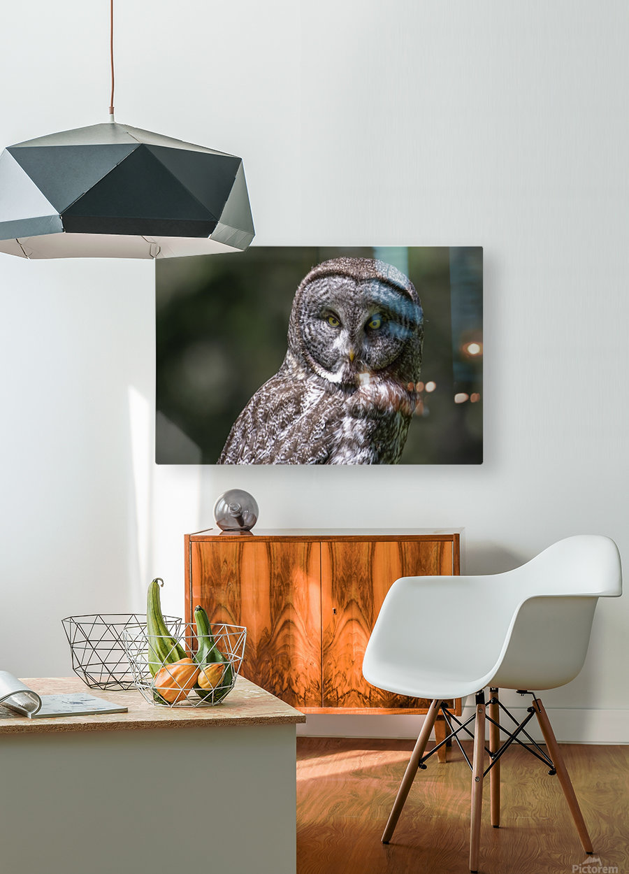 Great Grey Owl - Up close  HD Metal print with Floating Frame on Back