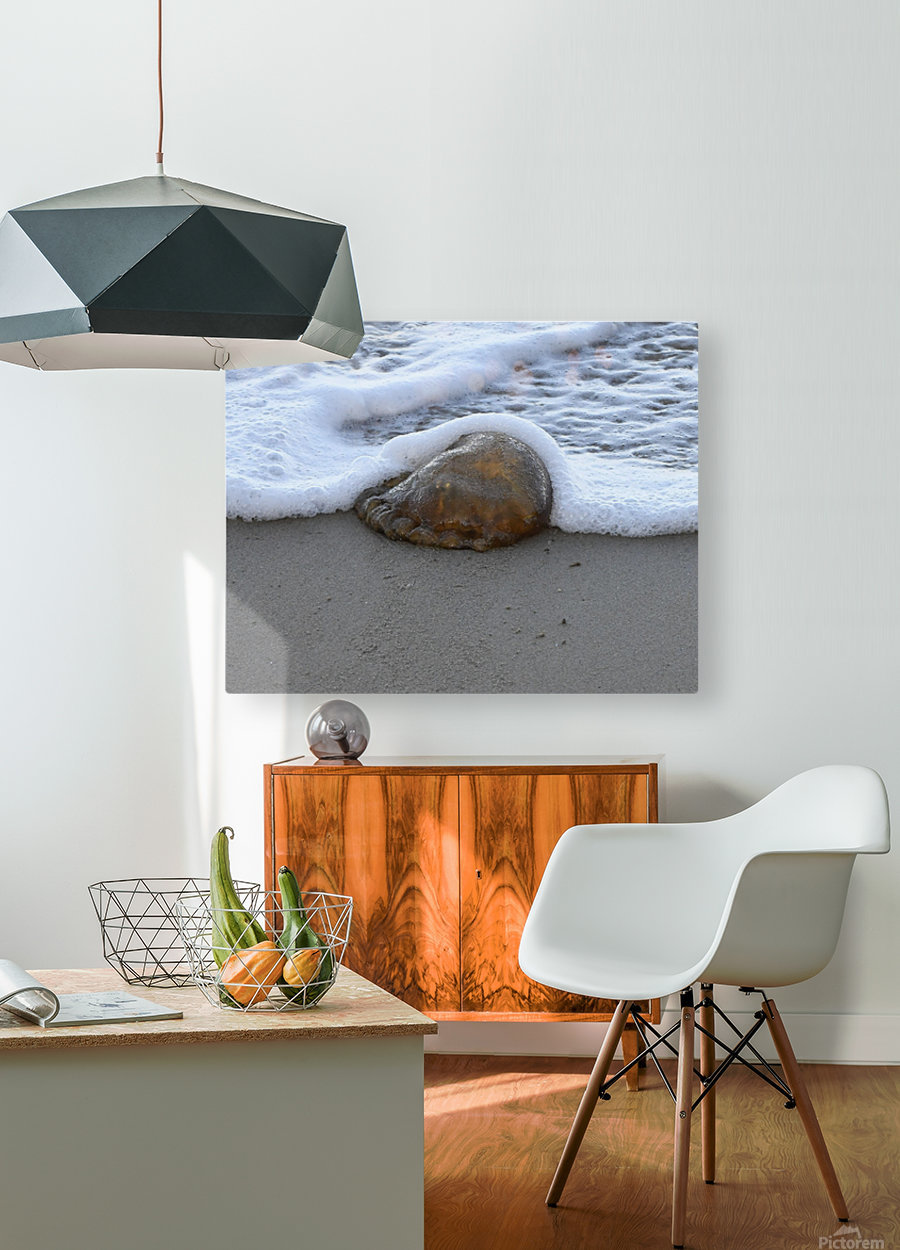 Jellyfish  HD Metal print with Floating Frame on Back