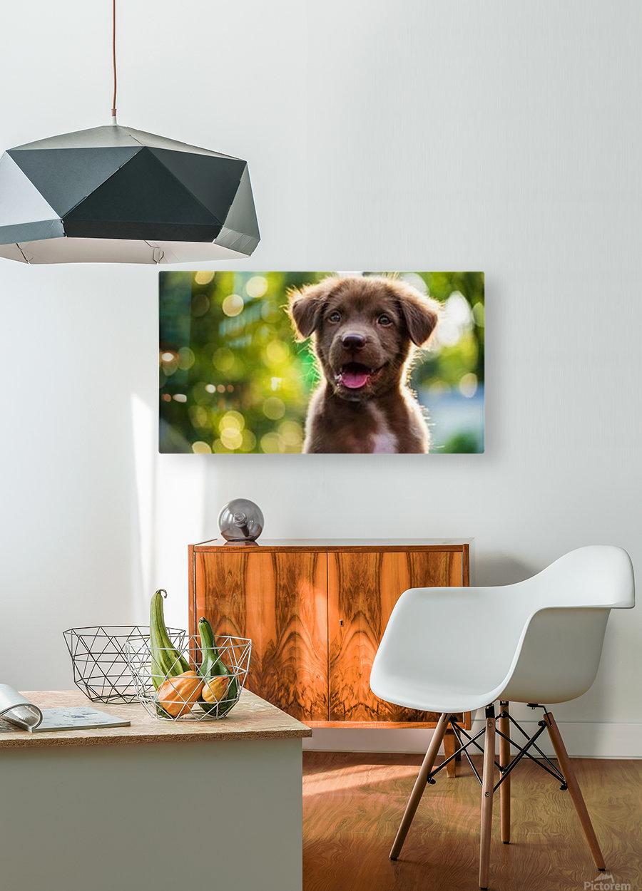 esa dog  HD Metal print with Floating Frame on Back