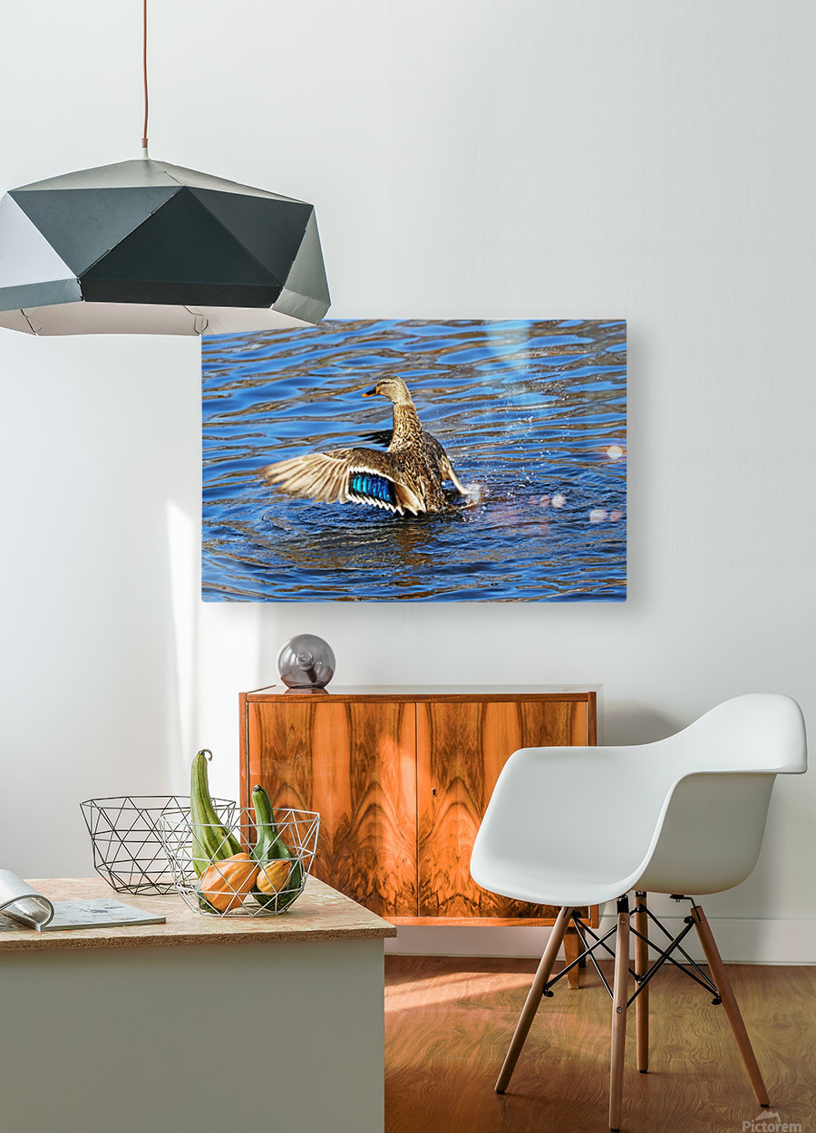 Flaunting The Blues  HD Metal print with Floating Frame on Back